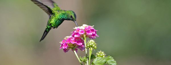 Google's New Hummingbird Algorithm and Why You Need To Know About It